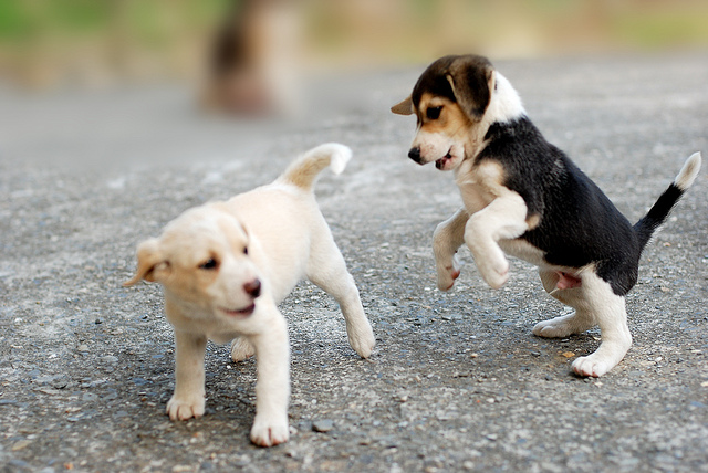 puppies playing on the - photo #35